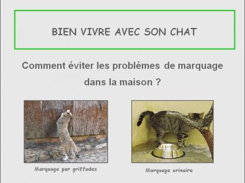 marquage_chat_1_jpeg